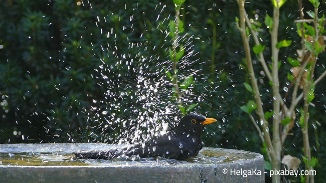 Auch Vögel haben bei heißen Temperaturen Spaß am Baden
