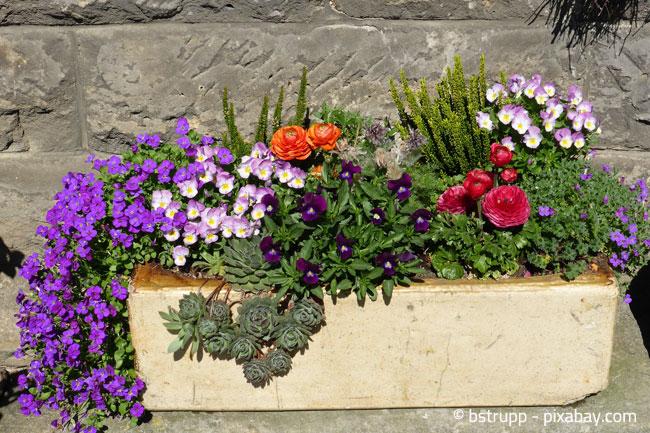 Blumenkübel aus Stein oder Beton wirken besonders stilvoll