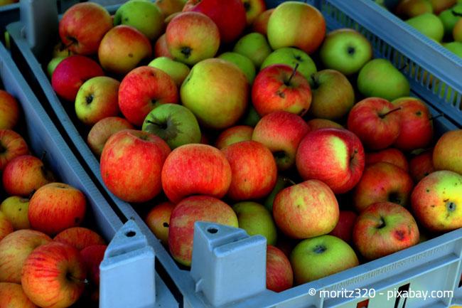 Bringen Sie Ihre Äpfel doch in eine nahe gelegene Mosterei und lassen Sie diese zu Saft verarbeiten