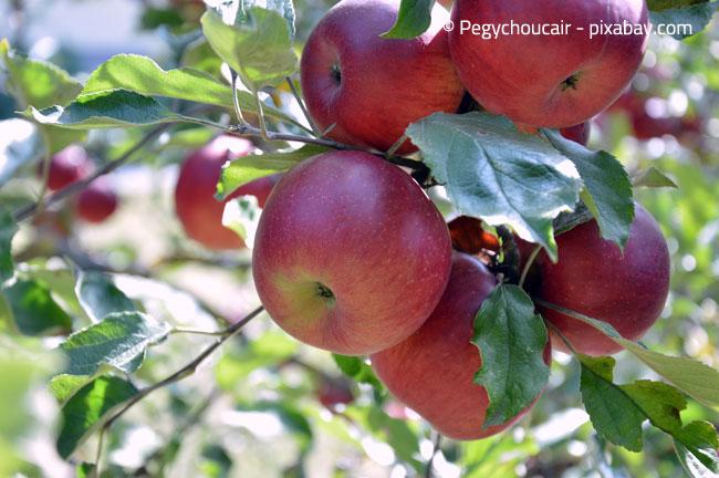 Verlassen Sie sich nicht nur auf den Geschmackstest bei der Apfelernte!