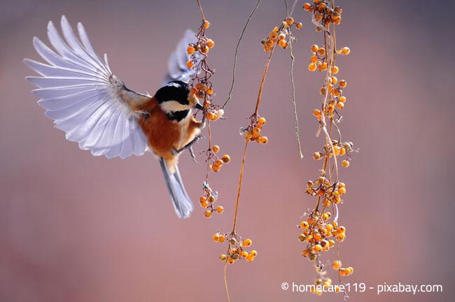 Gestalten Sie Ihren Garten möglichst vogelfreundlich!
