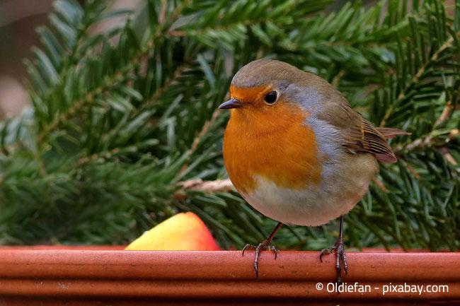Wie Sie Vogel Im Winter Richtig Futtern Garten Hausxxl Garten