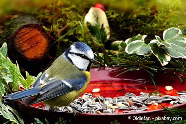 Einige Experten empfehlen mittlerweile die ganzjährige Fütterung von Vögeln