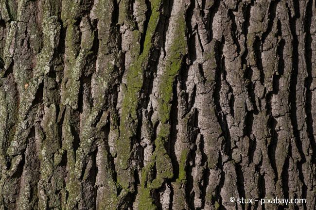 Achtung: Die Baumrinde kann bei starkem Frost schnell Schaden nehmen!