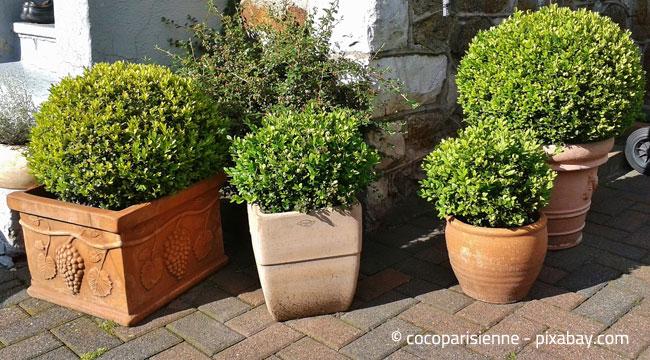 Kübelpflanzen sollten Sie im Keller überwintern, achten Sie jedoch auf ausreichend Lichtzufuhr.