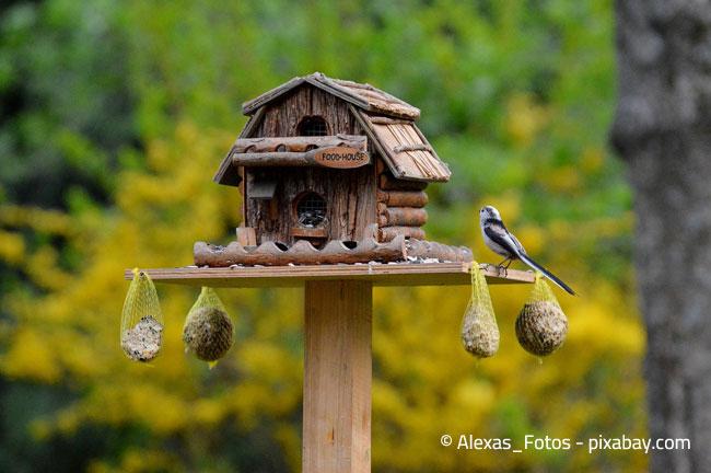 So könnte ein idealer Futterplatz für Vögel aussehen