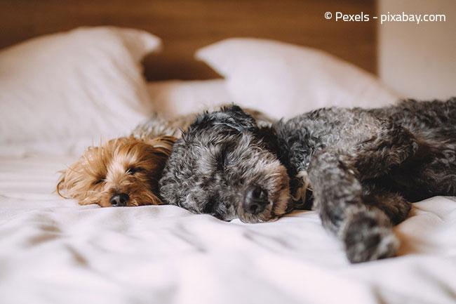 Sorgen Sie dafür, dass Ihr Hund einen gemütlichen Rückzugsort in seinem neuen Zuhause bekommt.