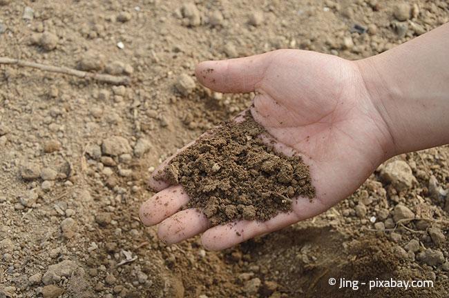 Viele Böden sind heutzutage überdüngt. Eine Analyse kann Aufschluss bringen.