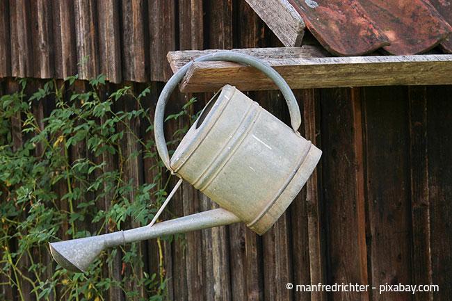 Häufiges Bewässern mit nur kleinen Wassermengen ist eher ein Fehler als ein Vorteil