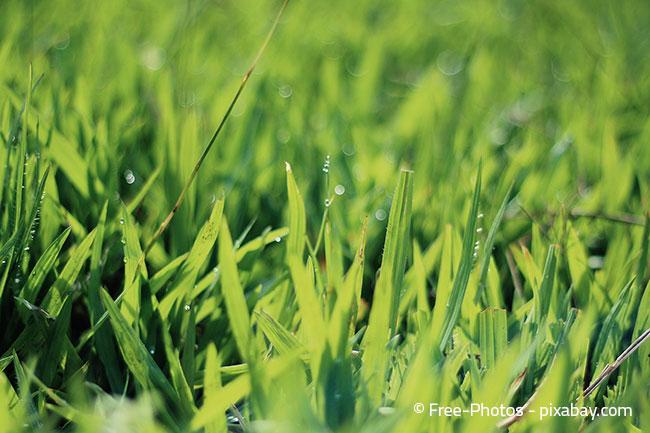 Mit automatischer Bewässerung sollte es möglich sein, dass Ihr Rasen immer schön saftig grün bleibt