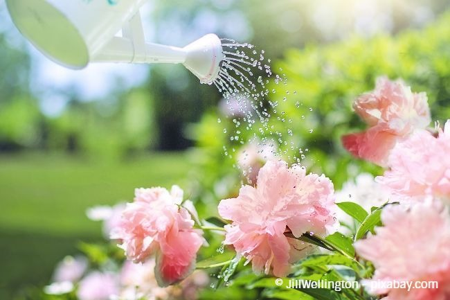Gießen Sie Ihre Pflanzen niemals bei Sonneneinstrahlung, sondern lieber erst in den Abendstunden