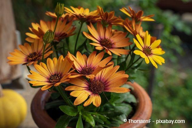 Gewöhnen Sie Ihre Kübelpflanzen nach dem Winter erst einmal an die Sonne