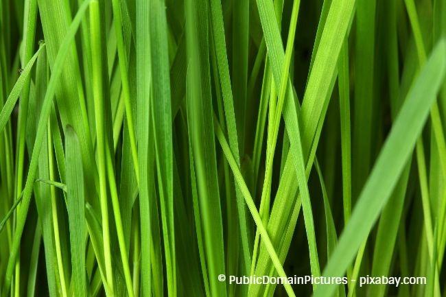 Damit Ihr Rasen saftig grün bleibt, sollten Sie ihm ausreichend Wasser zuführen