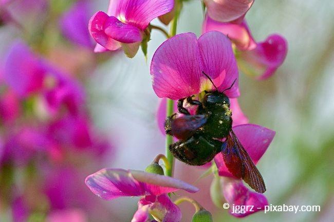 Duftwicke und Schmetterlingsflieder verströmen nicht nur einen wunderbaren Duft, sondern sind auch optisch ein echtes Highlight.