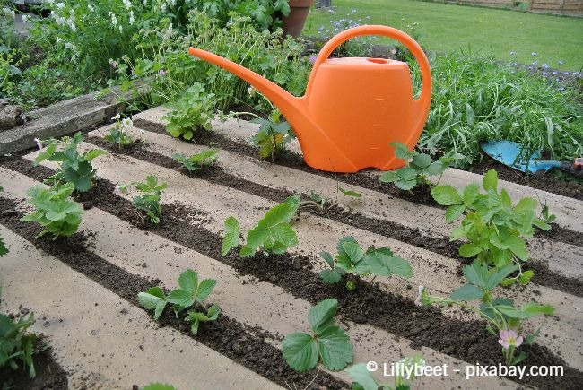 Achten Sie auf einen ausreichenden Abstand zwischen den Pflanzen, damit diese genügend Platz haben