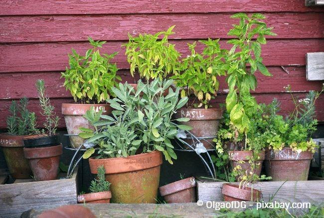 Einen kleinen Kräutergarten anzulegen ist nicht schwer, Sie sollten lediglich darauf achten, dass Ihre Kräuter keine Staunässe bekommen.
