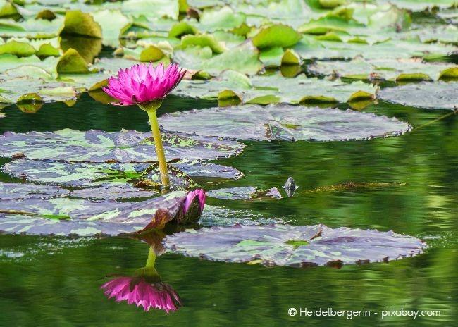 In einem Wassergarten gehört ein Teich zum absoluten Must-have