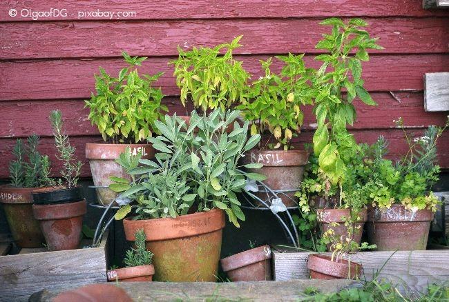 Ein Kräutergarten sieht nicht nur hübsch aus, sondern ist auch noch nützlich