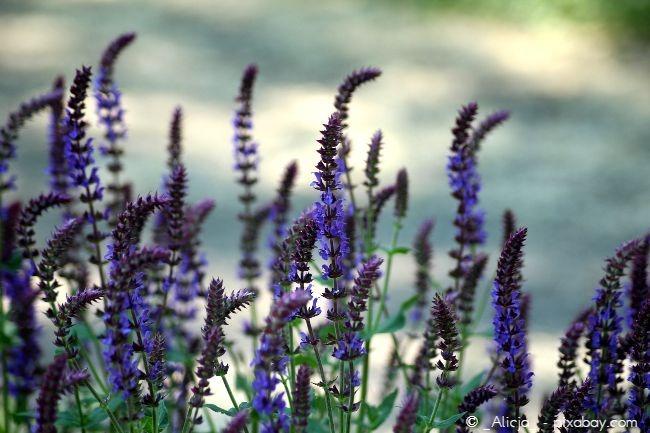 Ein angenehmes Mikroklima ist wichtig für Ihre Pflanzen, auch im Winter.