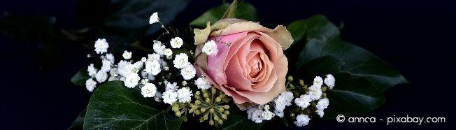 Rosen und Schleierkraut harmonieren nicht nur im Blumenstrauß wunderbar zusammen, sondern auch im Beet.