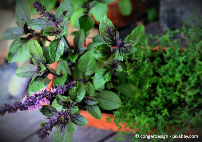 Ein Kräutergarten duftet nicht nur wunderbar, sondern ist auch nützlich für den Feinschliff bei leckeren Salaten.