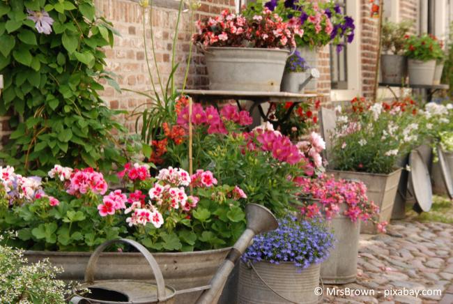 Verschiedene Pflanzgefäße können ein dekoratives Highlight in Ihrem Garten sein.
