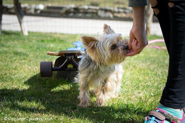 Wenn Ihr Hund etwas gut macht, sollten Sie ihn zwischendurch auch mit Leckerchen belohnen.