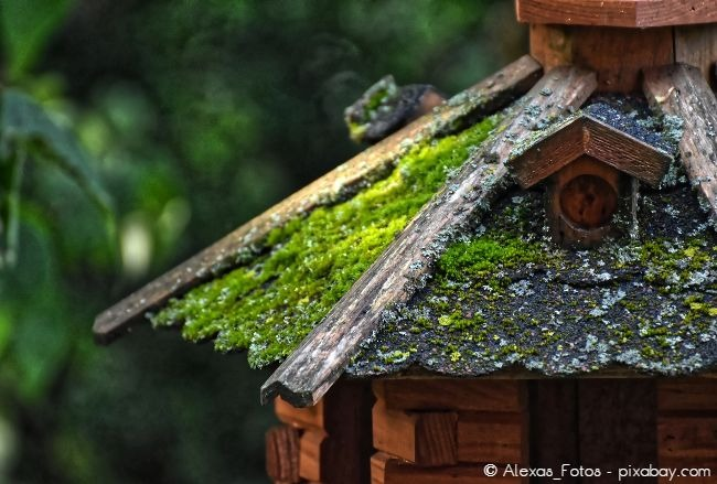Begrünen Sie das Dach des Vogelhäuschens ein wenig mit Moos, das sorgt für einen Hingucker. Dieses wächst über die Jahre von selbst weiter.