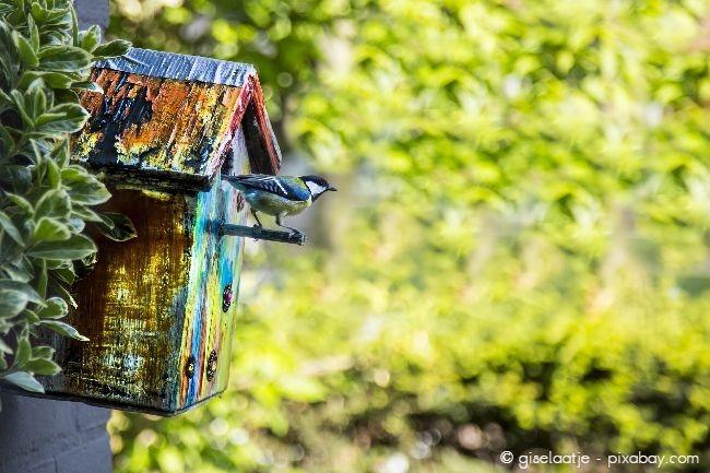 Um Vögel an das neue Häuschen zu gewöhnen, füttern Sie diese am besten das ganze Jahr über.