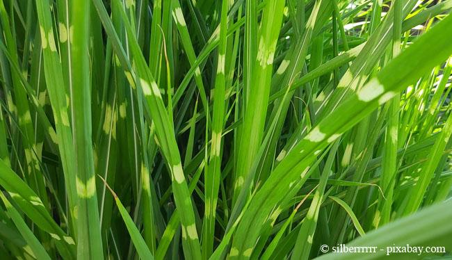 Auch Sträucher aus Bambus sind ein toller Windfang und zaubern mediterranes Flair.