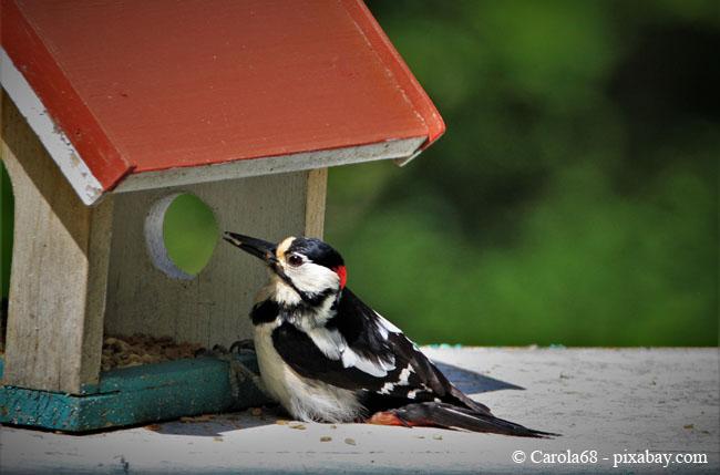 Ein Vogelhaus für den Buntspecht: im Baumarkt kaufen oder ganz einfach selbst bauen.