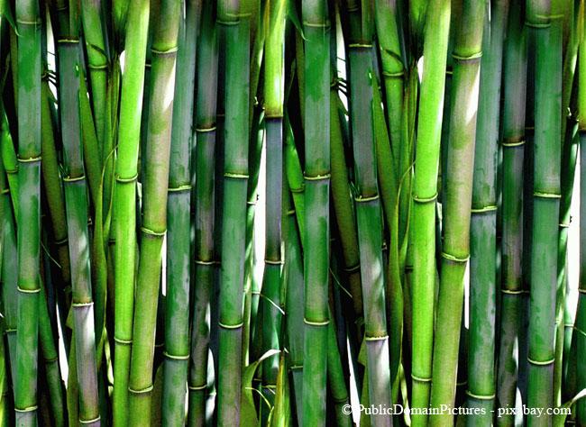 Bambus wächst extrem schnell und sehr dicht.