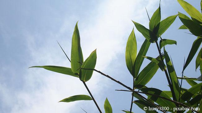Bambus liebt es sonnig bis halbschattig.