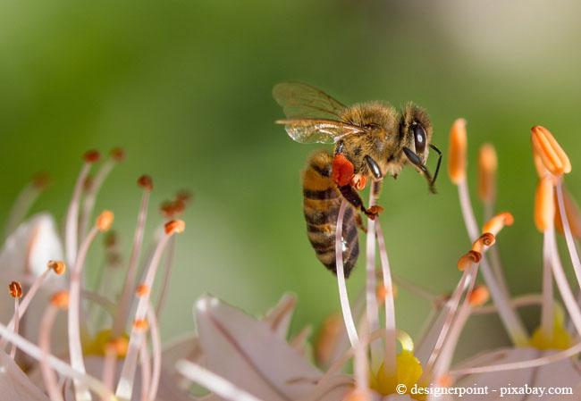 Bienen sind äußerst nützlich, denn sie bestäuben Ihre Pflanzen im Garten.