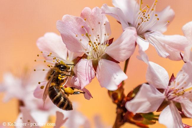 Bienen lieben Wildblumen und saftige Blüten.