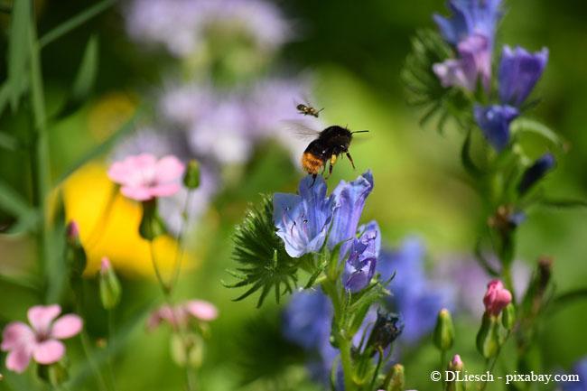 Blumenwiesen haben eine tolle Ökobilanz.