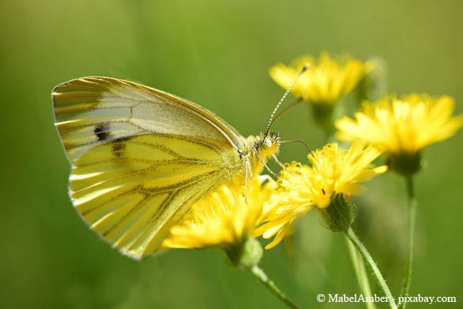 Eine Wildblumenwiese lockt auch wunderschöne Schmetterlinge an.