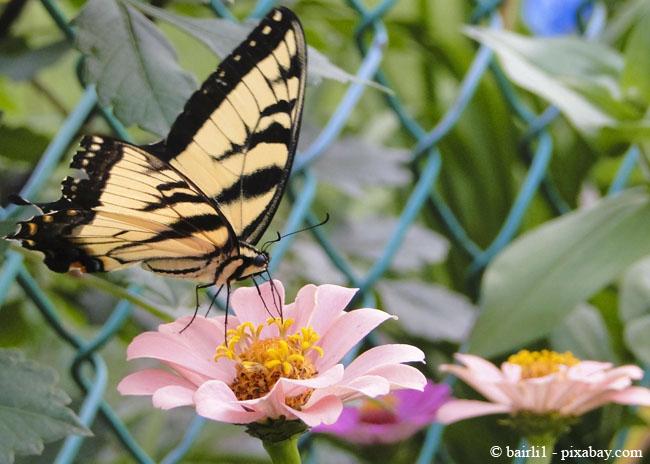 Mit einer Wildblumenwiese können Sie wunderbar Schmetterlinge anlocken.