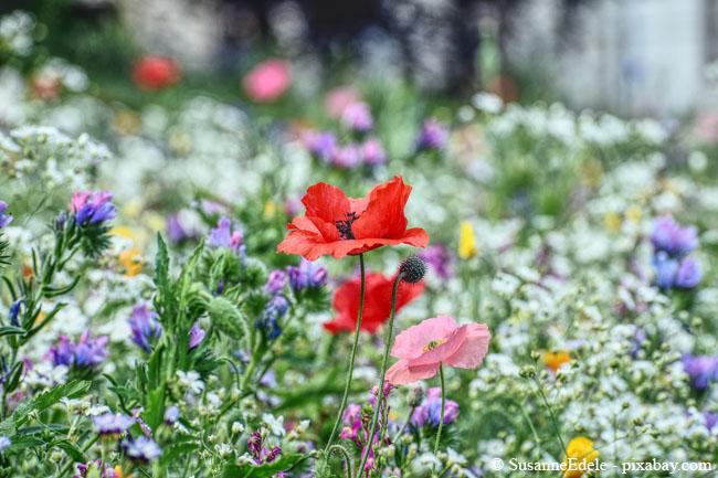Für eine Blumenwiese sollte der Boden möglichst nicht zu feucht sein.