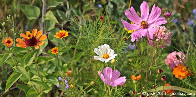 Eine Wildblumenwiese hat den Vorteil, dass Sie diese nur selten mähen müssen.